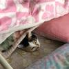父のベッドで寝るみーちゃん