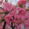 【ブログ運営報告】2019年度3月