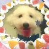 【これはフォトジェニック!】犬の写真ケーキを注文してみた!【お祝いにオススメ】