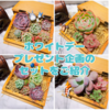 たにログ157 【プレゼント企画】ホワイトデー多肉プレゼント企画の4セットをご紹介!