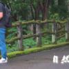 『梅雨』 雨上がりの風景