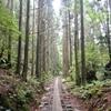 (昔話)屋久島④ トロッコ道の雰囲気 ~縄文杉までの道~