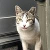 白血病の野良猫を保護するか?