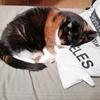 悲しいけれど猫がいなくなってしまったときのことを考えなくては。