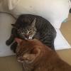 猫との生活、寝起きのネコーズ