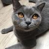 シンガポールの猫カフェ@Meomi Cat Cafeへ。そしてシンガポールからバレー観戦!