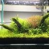 36cm水槽の水草レイアウト、立ち上げから3か月目以降についてを紹介します!【第3弾、完結編】