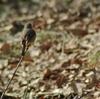ムスメと探鳥、北本自然観察公園の野鳥。