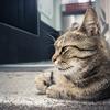 【猫との対話#2】「やりたいこと」が見つからない本当の理由。
