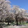 5月7日 札幌農試公園