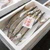 2017年10月20日 小浜漁港 お魚情報