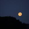 【49-1】『月光の東』宮 本 輝 著 《その一・塔屋よねか について》