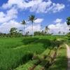 バリ島の風景 -1-