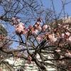 梅まつりも桜まつりも・・・