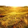 10月、稲取細野高原のすすきは黄金色に。スタンプラリーや演奏会など「秋のすすきイベント」開催 静岡県東伊豆町