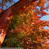 紅葉を撮りに京都へ その1 下鴨神社