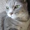 我が家のチビ猫を紹介します