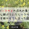 【家庭菜園】これがハクサイの成れの果て…。放置し続けていたらハクサイの花を咲かせてしまった話。