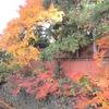 街の紅葉と、今日のオヤツと夕ごはん