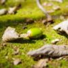 落ち葉を踏みし足元に 転がる木の実木漏れ日浴びて