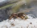 【トビイロケアリ飼育日記 1】アリプロジェクト本格始動!家の中で女王蟻を捕まえました