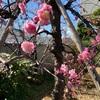 春の訪れ🌱