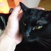 今日の黒猫モモ&白黒猫ナナの動画ー977