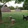 黒い犬と竪穴式住居