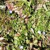 小さい春と白檀の石鹸