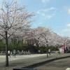 桜満開で綺麗でした(^^♪