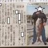 大畠で10キロを超す大鯛