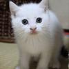 私の短編猫小説-2「あなたの家に猫がやってきた理由」