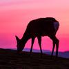 またまたOLYMPUS E-M1 markⅡと共に奈良・若草山で鹿と戯れる
