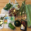 高知県須崎市よりまごころ野菜セットが届きました