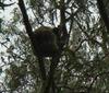 オーストラリアの動物 in サンシャインコースト -Sunshine Coast-