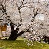 庭園42 醍醐寺弁天池と無量寿苑/霊宝館庭園の現状