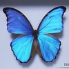 【奇跡の蝶、バタフライ効果が時空を選択する】