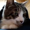 エアコンをつけたら寒かったらしく、ブランケットに包まって寝ちゃった猫さん