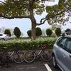 奥琵琶湖に海津桜を見に行く