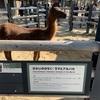 あれ?上野動物園ってこんなにツマラナかった?