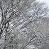 ◆'19/03/24    寒の戻りの高館山①