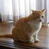 猫にとって住環境の変化はストレスなのです。