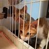 保護猫だいずの家慣れ記~先住猫とご対面~