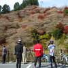 小原四季桜&香嵐渓紅葉ライド