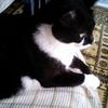 2006年8月~10月 背もたれで熟睡のくまちゃん