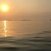 三河湾は今週さらに活況になっていた!4月中旬のカヤックフィッシング