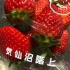 気仙沼のイチゴ