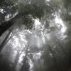 雨の森、霧の中を