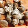 生椎茸はタッパーウェアで保存