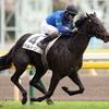 【バルトリ圧勝】東京競馬場でPOG的に注目の新馬戦
